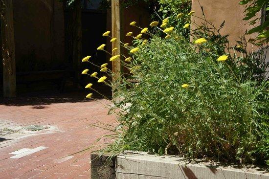 Abiquiu Inn: Desert flowers