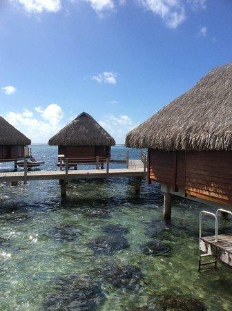 Manava Beach Resort & Spa - Moorea : Fantastic Bungalows