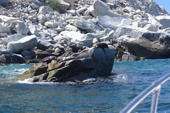 Cabo Pulmo Marine Preserve: Lobos Marinos preciosos