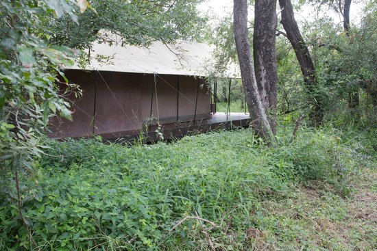 Honeyguide Tented Safari Camps: Zelt