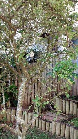 Spa e Pousada Alquimia: Jardim