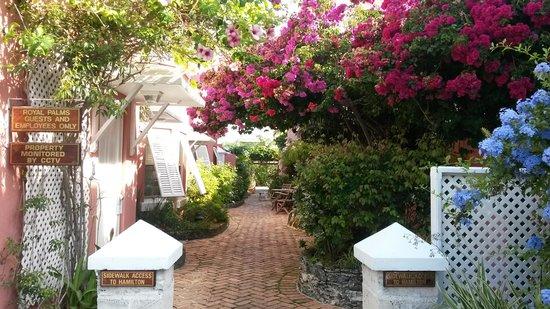 Royal Palms Hotel: So many fragrant flowers & plants!