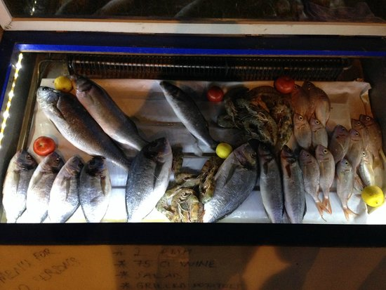 Selam Restaurant: Fresh Fish