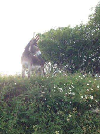 Skye Shepherd Huts: George Donk