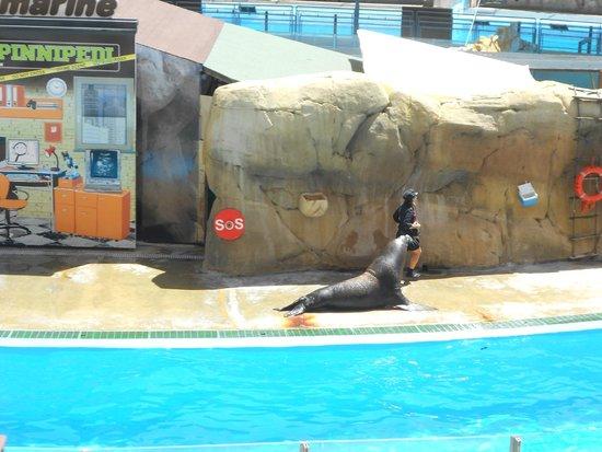 Zoomarine: le foche .. spettacolo divertentissimo