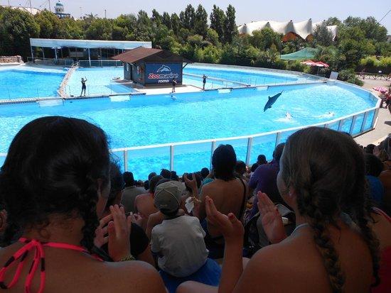 Zoomarine: i delfiniii .. emozionante