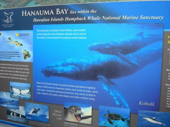 Hanauma Bay Nature Preserve: Hanauma Bay