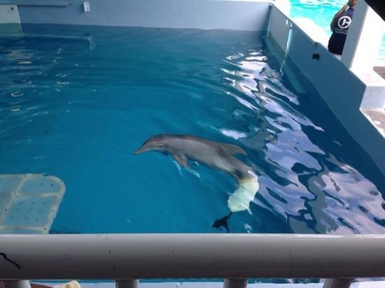 Clearwater Marine Aquarium: wonderful to see
