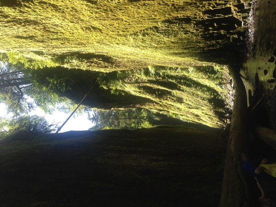 Oneonta Gorge: Beautiful mossy walls