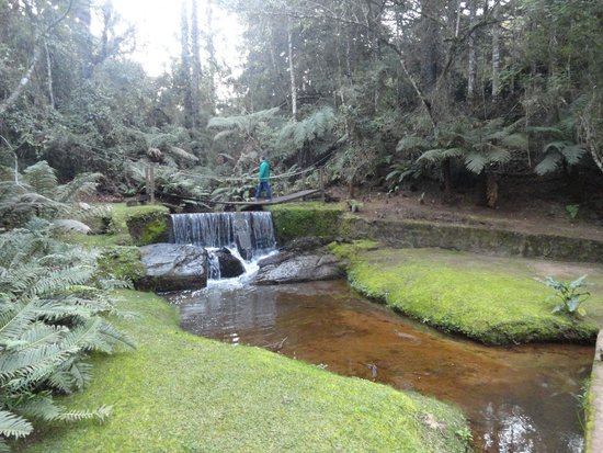 Grande Hotel Campos do Jordao: Acredite! O espaço externo inclui uma floresta, um córrego e uma cachoeira.