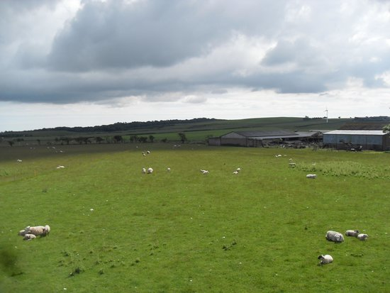 The Inn at Lathones: A View From Studio 23...Lots of Sheep!!