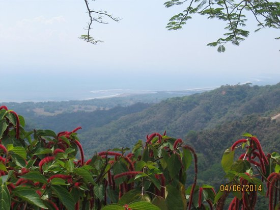 Pura Vida Gardens and Waterfalls : Coastline view from the the gardens