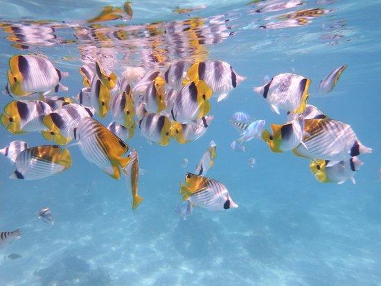 Aitutaki Lagoon: crystal clear