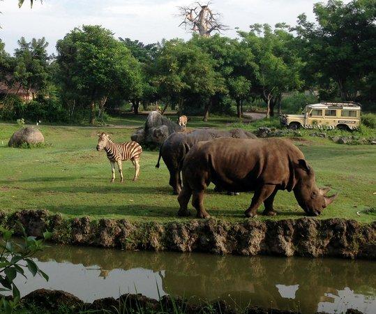 Mara River Safari Lodge: Feeding Rhinos and Zebras from our room