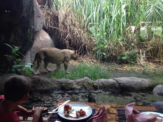 Mara River Safari Lodge: View from the table at the Tsavo Lion restarant
