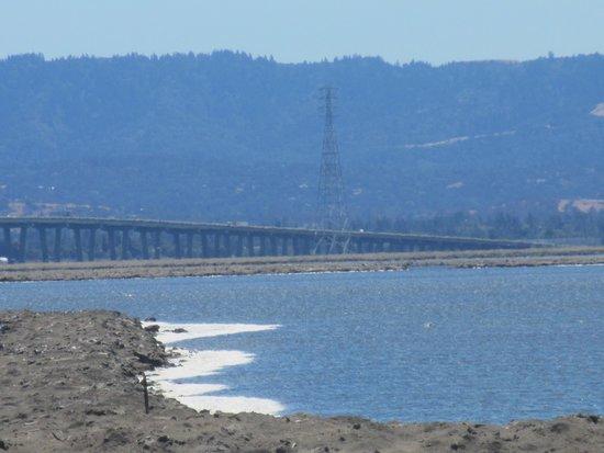 View of Bay and Dumbartoon Bridge, Coyote Hills Regional Park,  Fremont, Ca