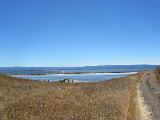 View from Trail, Coyote Hills Regional Park, Fremont, Ca