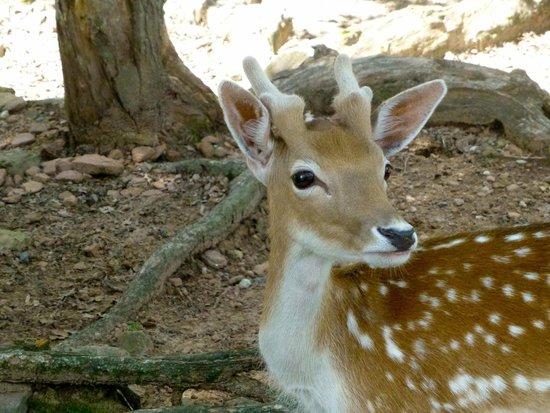 Wisconsin Deer Park: Bambi!