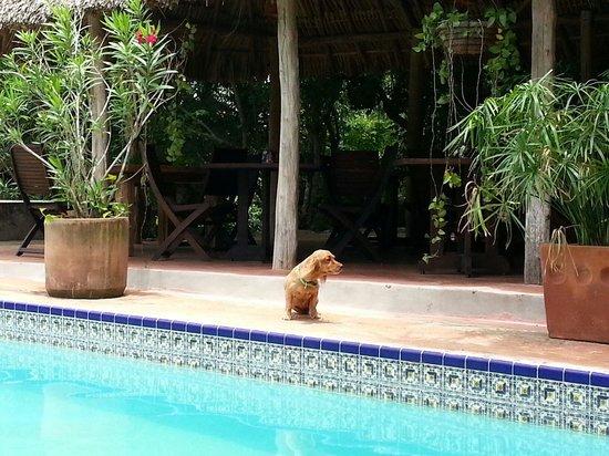 Hacienda Hotel Santo Domingo: Excelente compañía!!