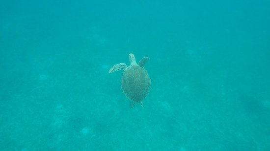 Robinson Speed Boat Tours: LOVED snorkeling with sea turtles