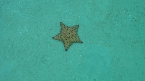 Robinson Speed Boat Tours: Starfish!