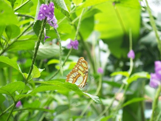 Butterfly Haven : mariposario3