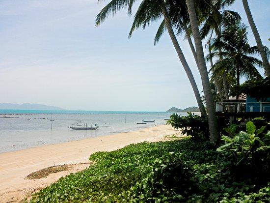 Armando's Beach Restaurant : daytime view