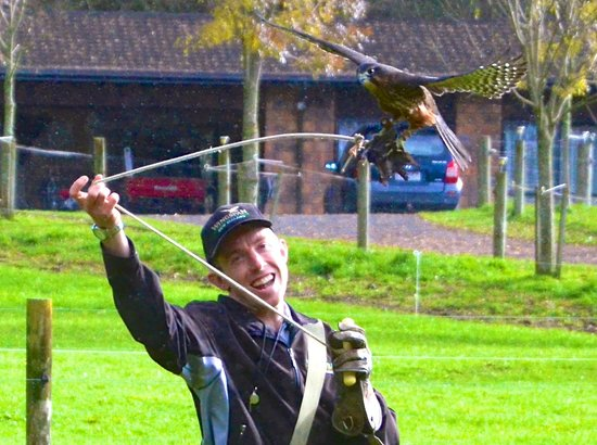 Wingspan National Bird of Prey Centre : in action