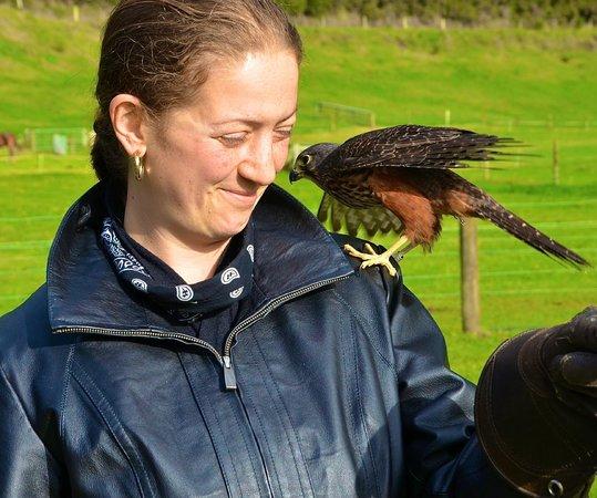 Wingspan National Bird of Prey Centre : close encounter