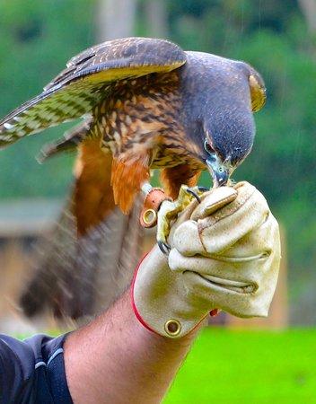 Wingspan National Bird of Prey Centre : hand feeding
