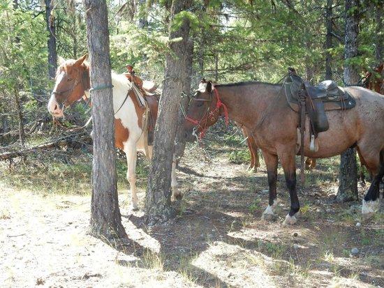 Three Bars Guest Ranch: Horsepower