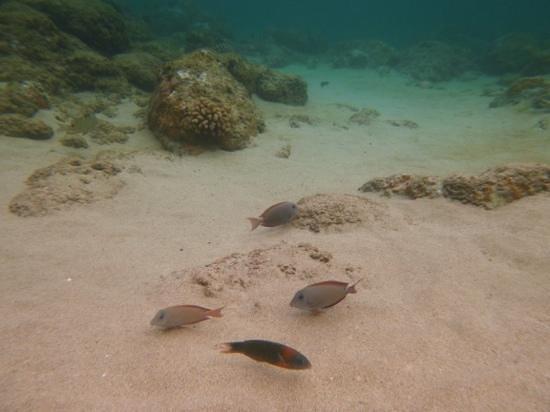 Ke'e Beach : fishies !