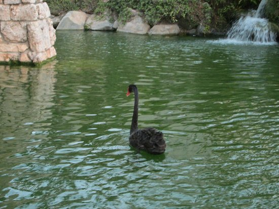 Ruinas del Mar : Swans glide in the surrounding moat...