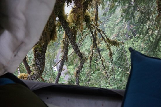 Pacific Tree Climbing Institute : View from the tree bed- see our white car below?