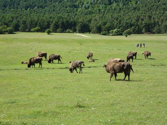Reserve Biologique des Monts d'Azur : Une jolie photo du site