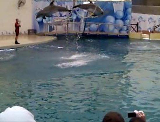 Aqualand & Dolphinland: Dolphin Show