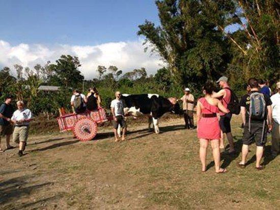 Don Juan Tours : Ride on a typical carreta