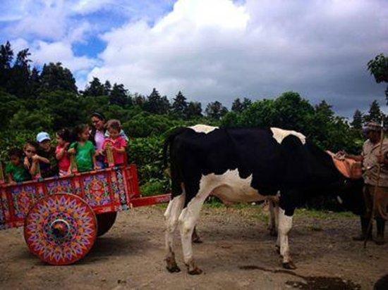 Don Juan Tours : Kids on a typical carreta