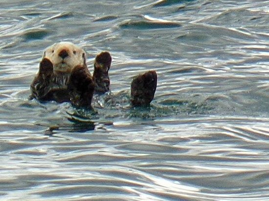 Glacier Wind Charters: sea otter (we named this little guy Otto!)
