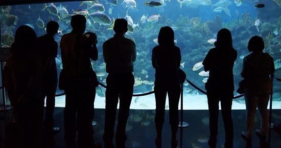 Aquaria KLCC : hypnotised by the fish.