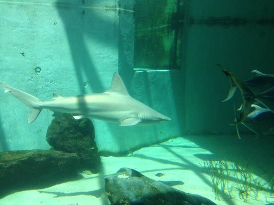 Mote Marine Laboratory and Aquarium : shark tank