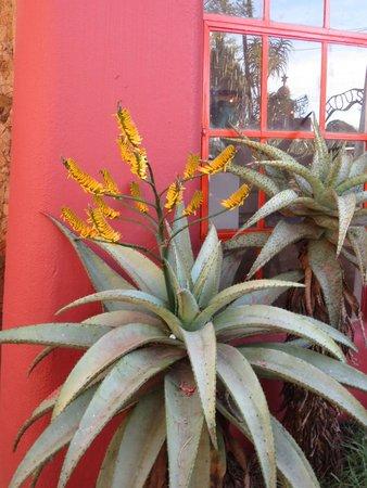 Malandela's Guest House: Vibrant colors