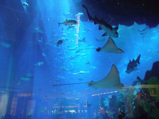 Dubai Aquarium & Underwater Zoo: The BIG tank