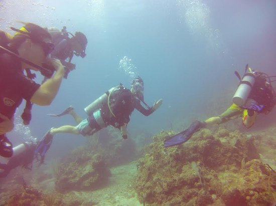 St. Thomas Diving Club: Learning to dive with the St Thomas Diving Club!