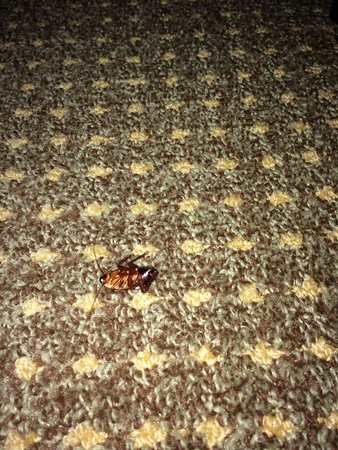 Homewood Suites by Hilton Albuquerque - Journal Center: Almost stepped on this one...it was already dead.