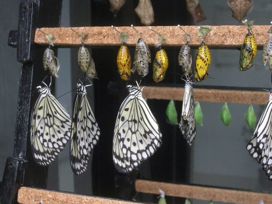 Mariposario de Benalmádena: Hatching