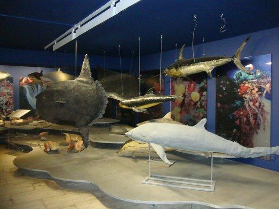 Thalassa Municipal Museum: Зал с экспонатами рыб