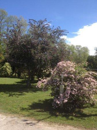 Camping Le Haras : Campsite gardens