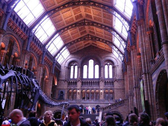 Natural History Museum: Museo de Historia Natural