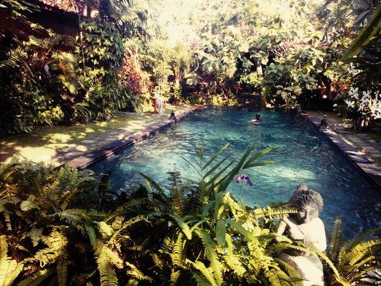 Villa Kampung Kecil : het gemeenschappelijke zwembad